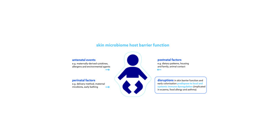 From birth, barrier function and the water handling properties of the stratum corneum are continually optimising and the properties that make infant skin unique are thought to persist through the first 12 months of life2. Furthermore, the baby's skin is less firmly attached than mature skin and has a higher propensity to increased trans epidermal water loss and reduced stratum corneum hydration, resulting in a less effective skin barrier function4,5,6.  Additionally, because the ratio between baby body surface to baby body weight is higher, topical agents are more readily absorbed and can therefore have a more pronounced effect on the baby's skin4.  A baby's skin is therefore more vulnerable to the environment than adult skin, and if not properly cared for, it becomes susceptible to dryness, conditions such as atopic dermatitis, nappy dermatitis, or even infections.  Development of baby skin microbiome  The skin microbiome protects us against invading pathogens, is involved in the development of our immune systems and breaks down natural products7.  Microbes and their metabolites affect development as early as in utero, with significant colonisation occurring at birth—babies born vaginally acquire bacteria that colonise the vagina and those born via caesarean section acquire those that are associated with the skin7,8,9. Over the first six weeks of life, these differences seen based on mode of delivery lessen and the infant's skin microbiome evolves to reflect something similar to its mother's with bacteria varying by body site10,11.      Evidence suggests that the development and maintenance of a diverse microbiome composition in infancy is crucial in promoting normal epithelial development and integrity, as well as shaping some of our immune responses.  Disruption of this process can influence the development of inflammatory conditions like food allergy and eczema12.  Everything that an infant touches, bathes in, breathes, eats and drinks has the potential to affect their microbiome and the establishment of immune pathways. Naturally, anything that comes into contact with the skin directly has an important impact on the developing microbiome including detergents, hygiene products, soaps, moisturisers, wipes and other personal care products, as well as the timing and frequency of bathing12.