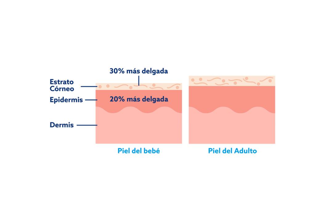 La diferencia entre la piel de un bebé y la de un adulto es que la piel del bebé es más delgada